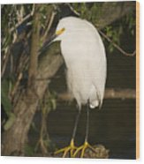 The Lonely Snowy Egret Wood Print