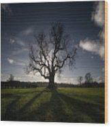 The Lonely Tree Wood Print by Angel  Tarantella