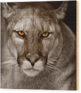 The Look - Florida Panther Wood Print