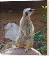 The Lookout - Meerkat Wood Print