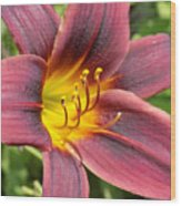 The Love Of Lilies Wood Print