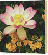 The Lovely Lotus Wood Print