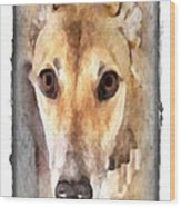 The Loving Eyes Of A Greyhound Wood Print