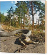 The Lunch Of Grass Snake Wood Print