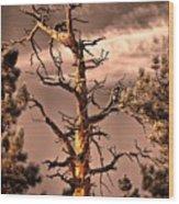 The Lurker II Wood Print
