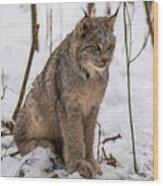 The Lynx Wood Print