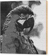The Macaw Wood Print
