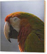 The Macaw Portrait Wood Print