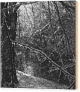 The Magic Pond Wood Print