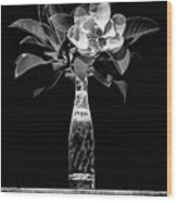 The Magnolia And Pepsi Still Life Black And White Wood Print