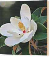The Magnolia Wood Print by Mamie Thornbrue