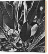 The Magnolia Wood Print