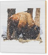 The Majestic Bison Wood Print
