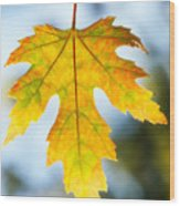 The Maple Leaf Wood Print