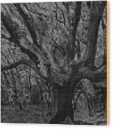 The Matriarch Wood Print