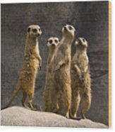 The Meerkat Four Wood Print
