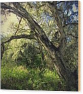 The Mighty Oaks Of Garland Ranch Park 1 Wood Print