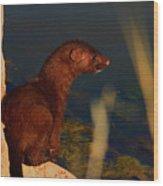The Mink Wood Print