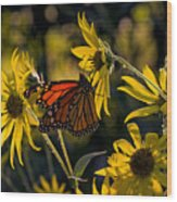 The Monarch And The Sunflower Wood Print
