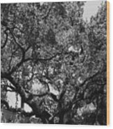 The Monastery Tree Wood Print