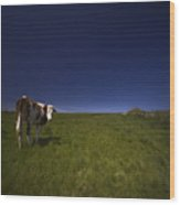 The Moody Cow Wood Print
