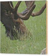The Moose Wood Print