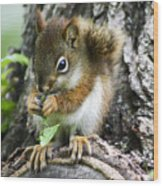 The Most Adorable Baby Squirrel Wood Print
