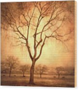 The Mother Tree Wood Print
