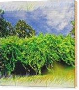 The Mother Vine - Roanoke Island, Nc Wood Print