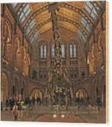 The Museum Of Natural History... London Wood Print