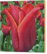 The Nederlands Tulip Festival 1 Wood Print