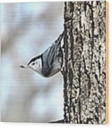 The Nuthatch Wood Print