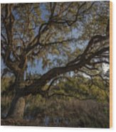 The Oak By The Side Of The Road Wood Print
