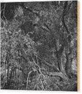 The Oak Wood Print
