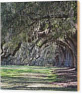 The Oaks At Boone Hall Wood Print
