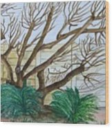 The Old Apricot Tree Wood Print