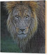 The Old Lion Wood Print