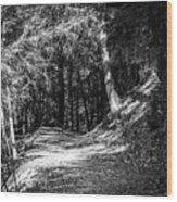 The Old Logging Road Wood Print