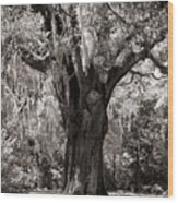 The Old Oak Is Still Standing Wood Print