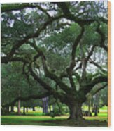 The Old Oak Wood Print by Perry Webster