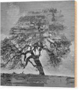 The Old Oak Tree Standing Alone  Wood Print