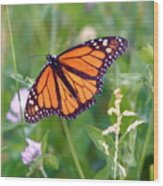 The Orange Butterfly Wood Print
