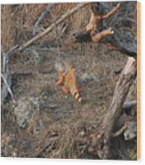 The Orange Iguana Wood Print