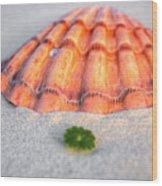 The Orange Scallop Wood Print