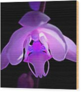 The Orchid Magic Wood Print