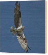 The Osprey Wood Print