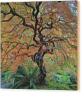 The Other Japanese Maple Tree In Autumn Wood Print