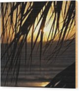 The Palm Tree In The Sunset Wood Print by Danielle Allard