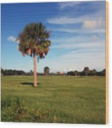 The Palmetto Tree Wood Print