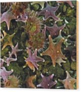 The Parade Of Stars Wood Print